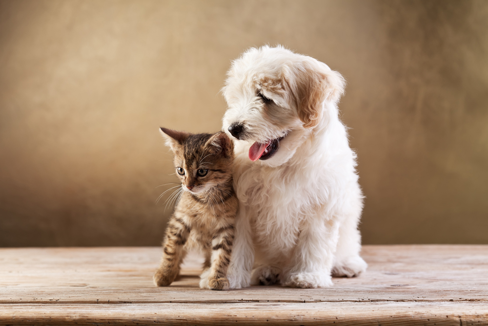 puppy and kitten sitting next to each other