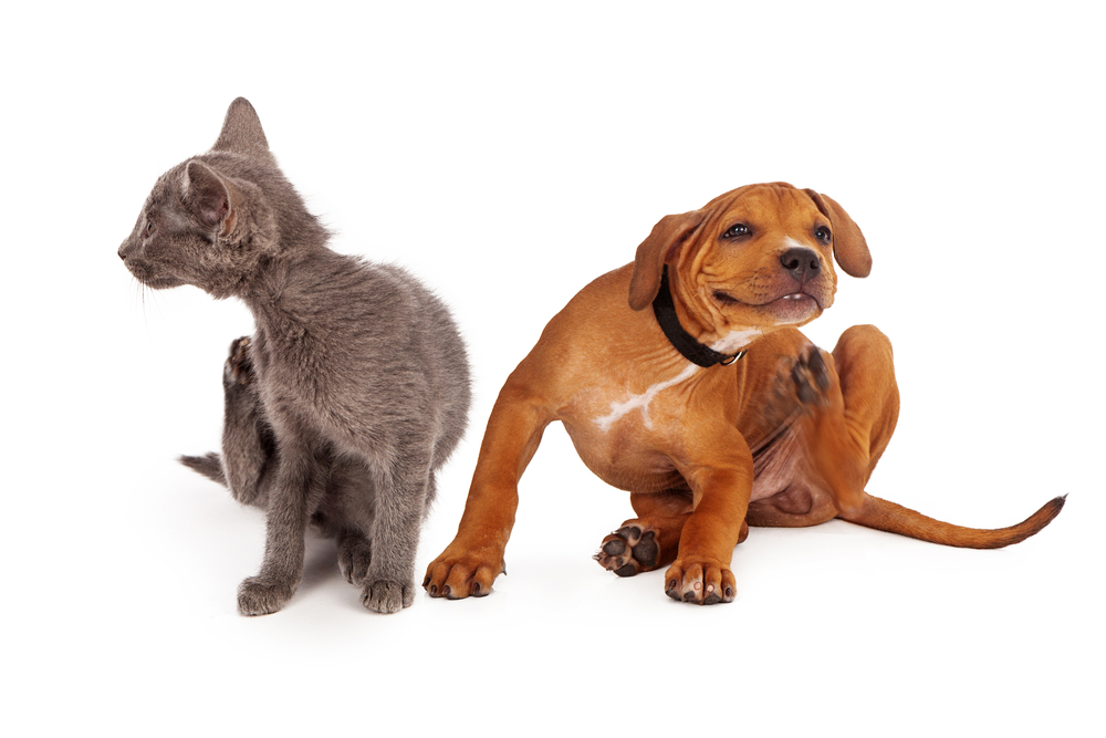 pet dermatology in Lewistown and Mifflintown!
